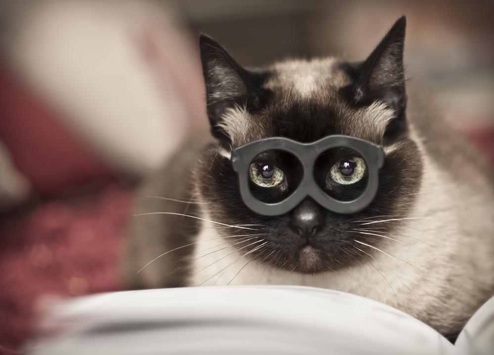 Whisker Fabulous Cat Reading