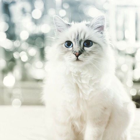 "Choupette: Courtesy Cosmopolitan ""I am rich and worth every dime."""