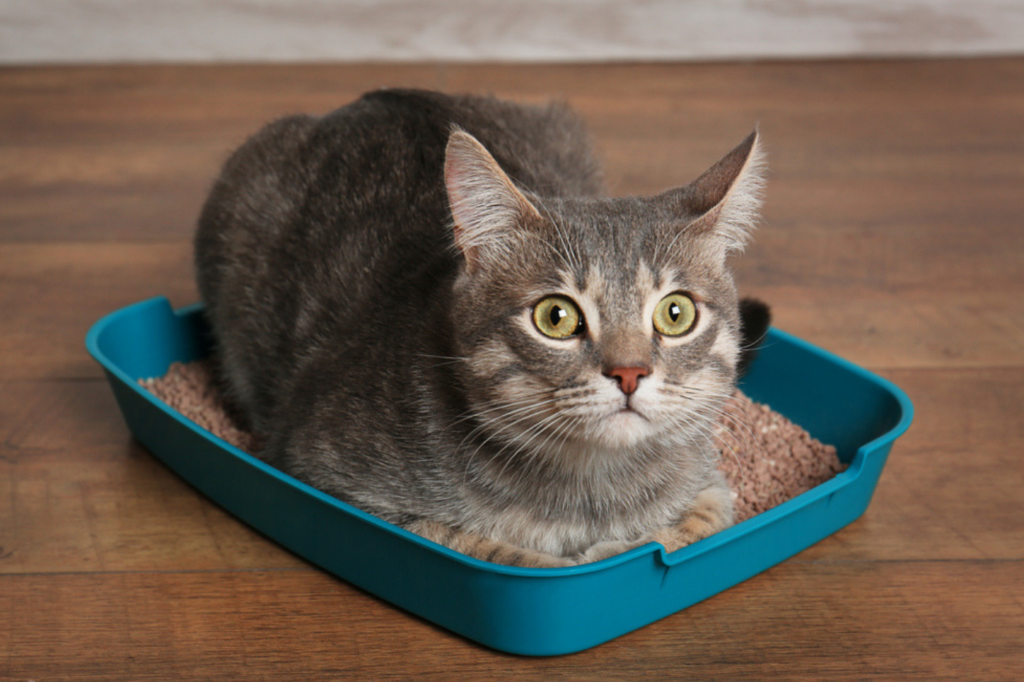 Whisker Fabulous Cat in Litter Box
