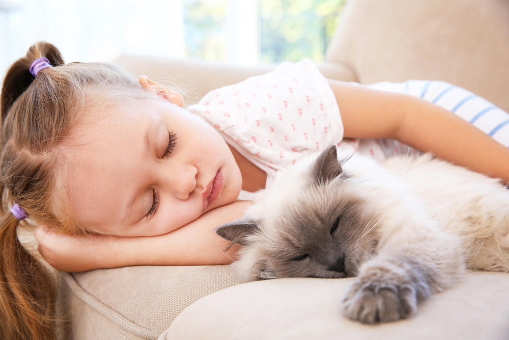 Cute little girl sleeping on sofa with fluffy cat