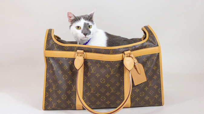 Whisker Fabulous cat writer Farley Waddlesworth in Louis Vuitton