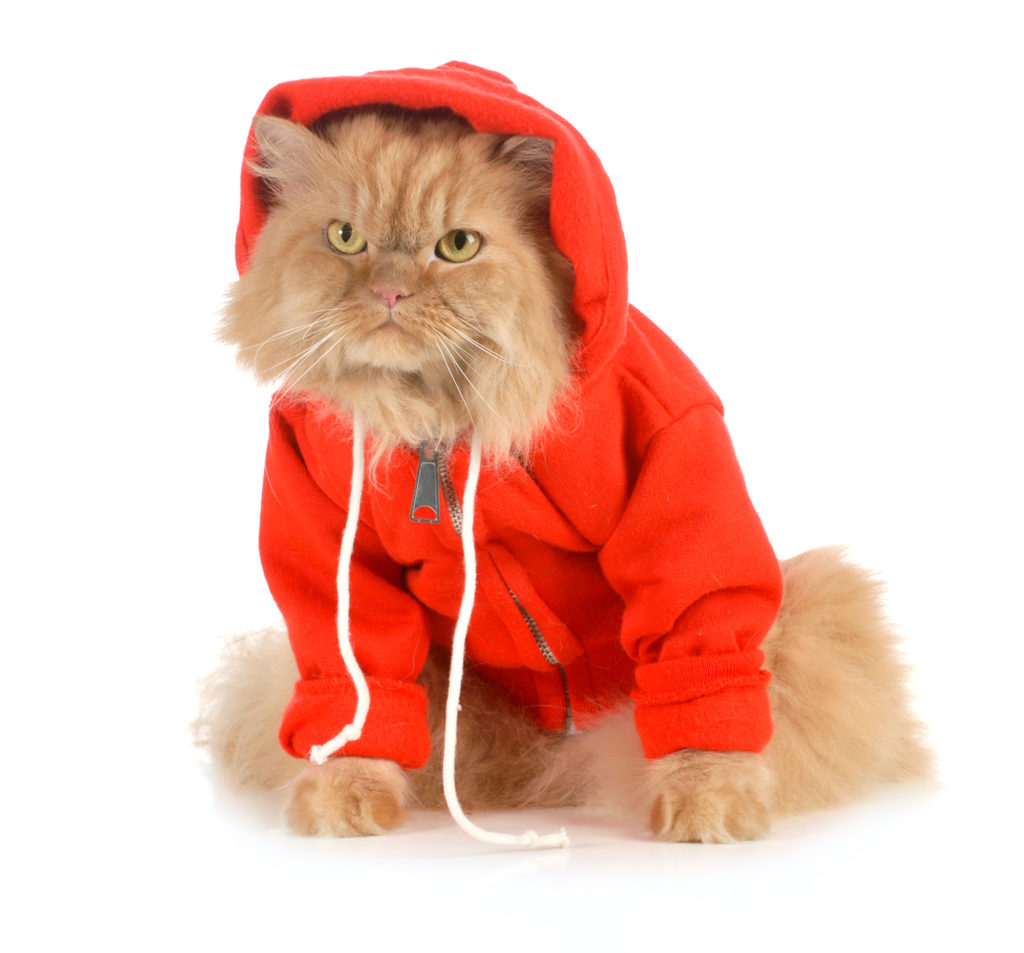 Whisker Fabulous cat wearing clothes
