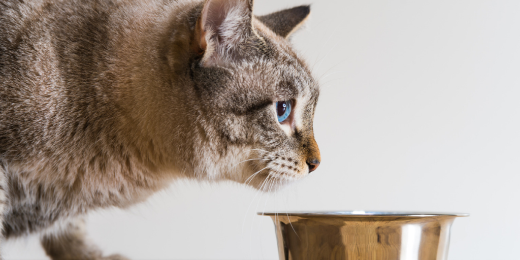 What is the best food for cats with urinary tract infections?
