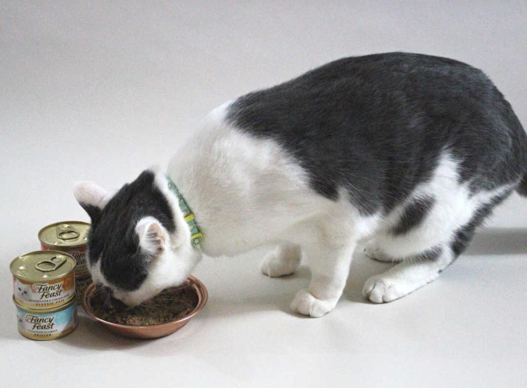 Farley Waddlesworth eats wet cat food