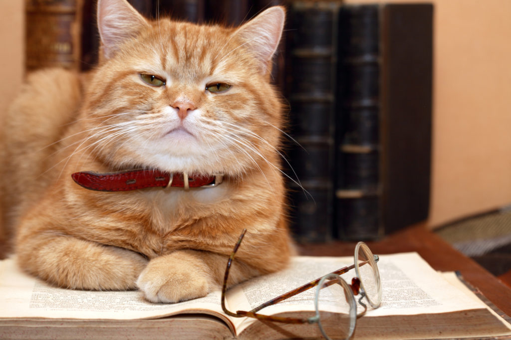 Whisker Fabulous best cat books to read and enjoy